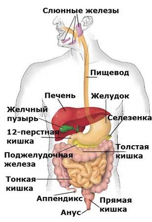 Желтушка прививка от гепатита в